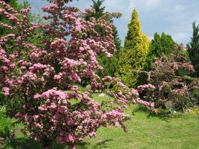 Botanická zahrada Univerzity Komenského foto