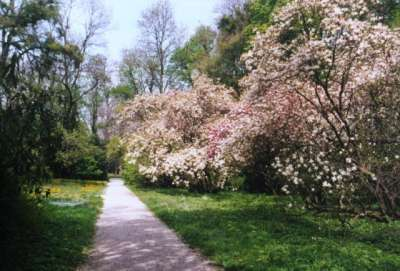 Arboretum Szeleste  foto