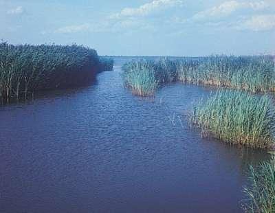 Neziderské jezero foto