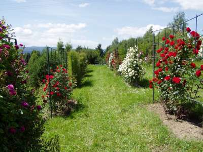 Arboretum Borová hora foto