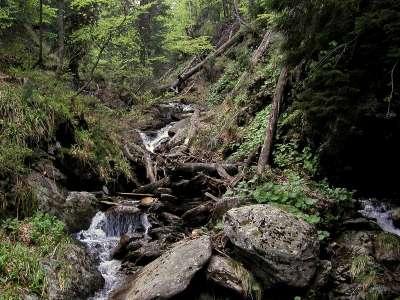 Boubínský prales foto