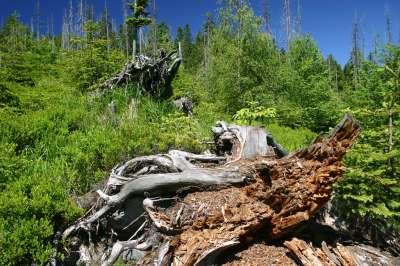 Národní park Šumava foto