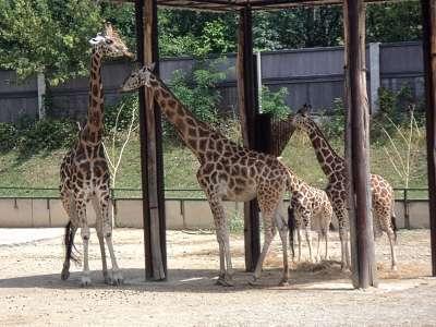 Zoo Bratislava foto
