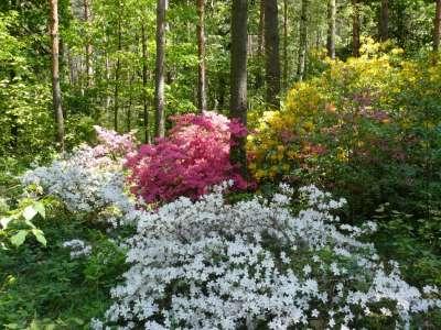 Arboretum Jeli  foto