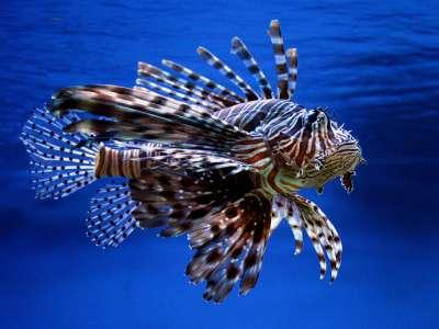Mořský svět foto