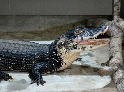Krokodýlí ZOO Protivín foto