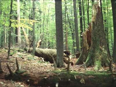 Žofínský prales foto